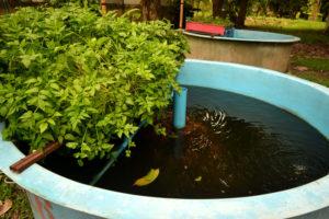 aquaponic farm fish and plants